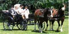 These horse drawn carriages are a lot of fun to take in and watch. So romantic! busybudgeter.com