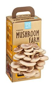 This mushroom farm is one of the best gifts for father's day if you have a dad that loves cooking, or just wants to work on his green thumb.